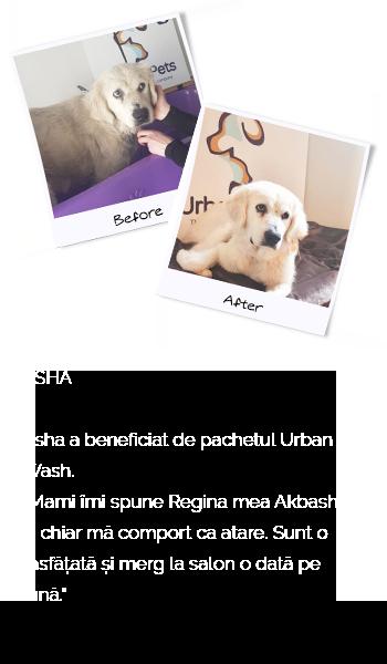 urbanpets-asha-mobile