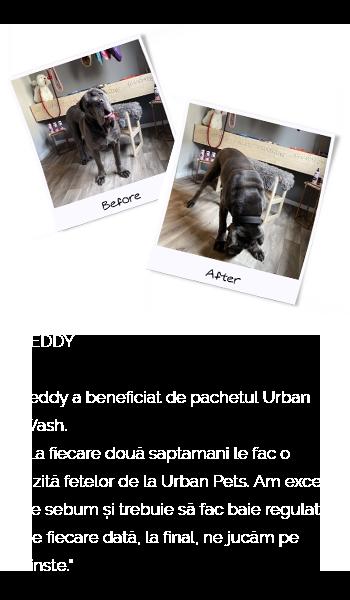 urbanpets-teddy-mobil